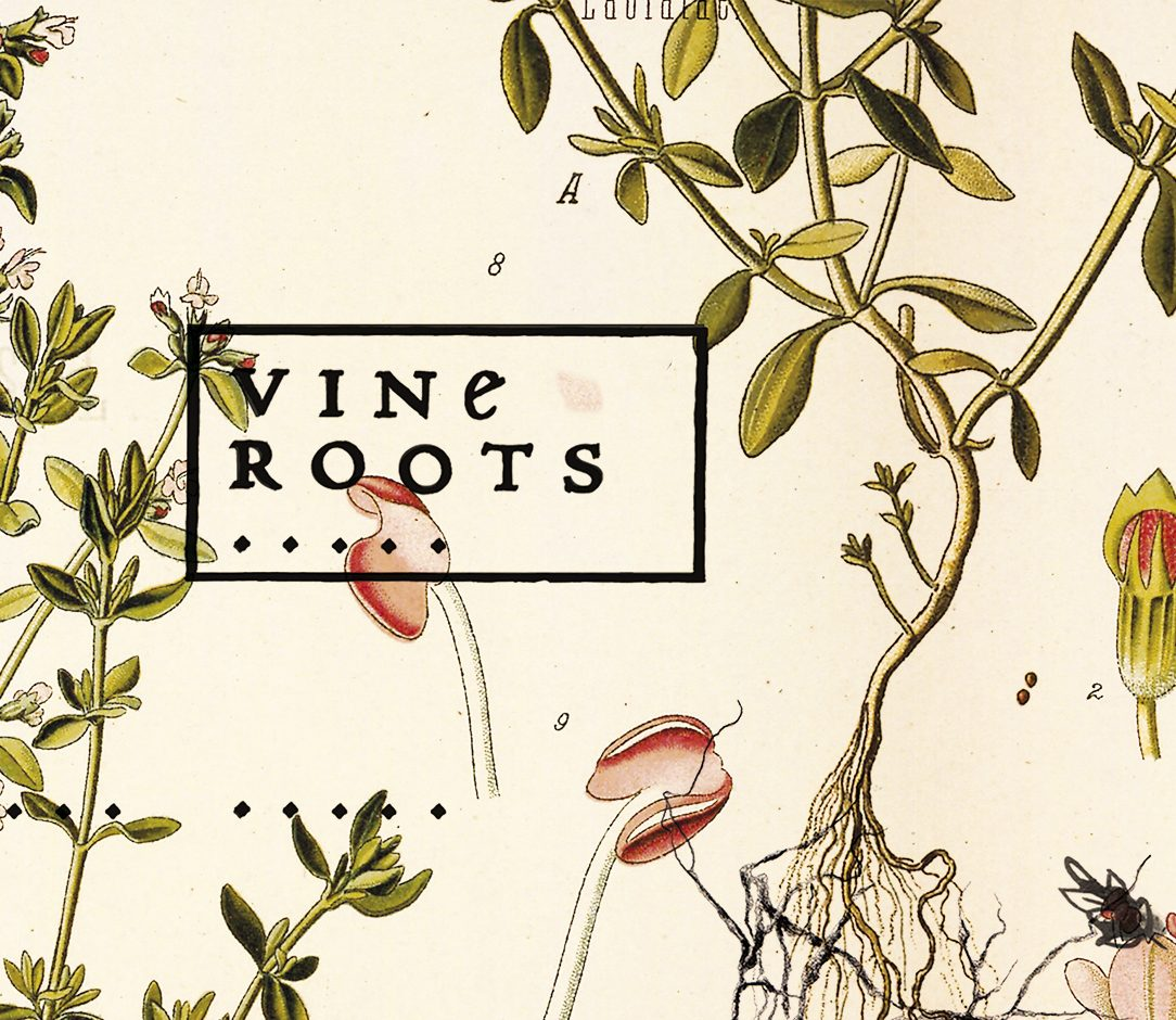 Slide Vine Roots b e1597317413794 - Product Launches -
